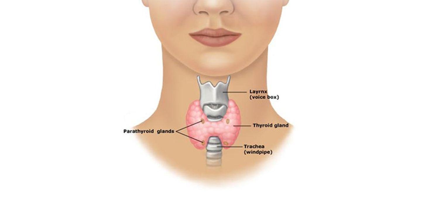 Parathyroid Surgery